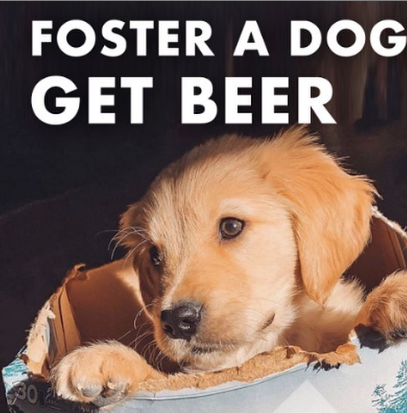 Busch Offering 3-Month Supply Of Beer To Dog Rescuers Amidst COVID-19 Pandemic
