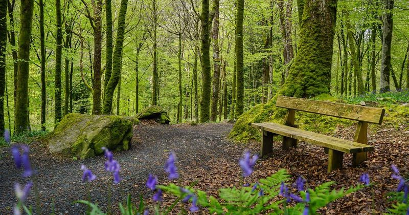 Wales Is Planting A Forest That Will Span The Whole Country.