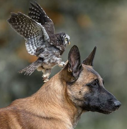 Owl And Dog Become Best Friends And The Photos Are Adorable