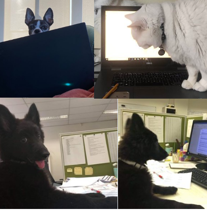 "People Are Sharing Pictures Of Pet ""Colleagues"" While Working From Home"