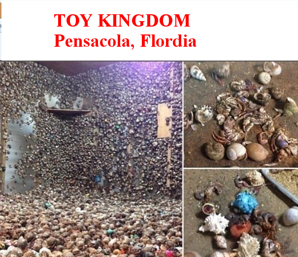 Toy Kingdom Florida Urged To Stop Selling Live Hermit Crabs