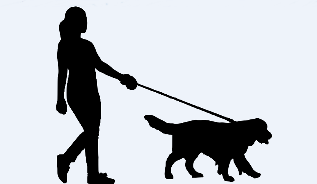 If You're Not Cleaning Your Dog's Leash, Here's Why You Should Be