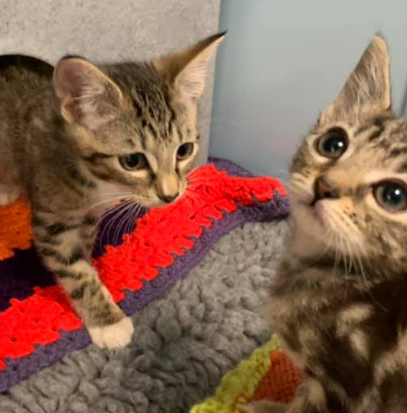 Shelter Needs Help Knitting Blankets For Cats In Need