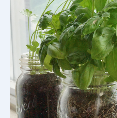 How To Start A Mason Jar Herb Garden