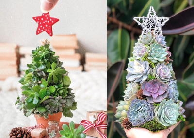 People are Getting Succulent Christmas Trees this Winter